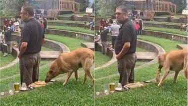 कुत्ते ने बहुत सफाई से पिज्जा पर किया हाथ साफ, किसी को नहीं लगी इसकी भनक (Watch Viral Video)