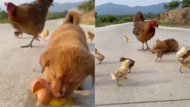 नन्हे कुत्ते को मजे से अंडे खाते देख गुस्साई मुर्गी, सिखाया ऐसा सबक कि रहेगा उसे जिंदगी भर याद (Watch Viral Video)