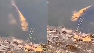 Viral Video: क्या इंसान जैसी शक्ल वाली मछली आपने कभी देखी है? सोशल मीडिया वायरल हो रही फिश को देख आपके उड़ जाएंगे होश