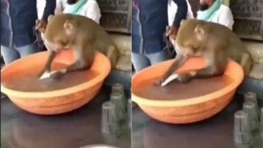इंसानों की तरह चाय की दुकान पर बर्तन धोते बंदर का मजेदार Video हुआ Viral, जिसे देख आप नहीं रोक पाएंगे अपनी हंसी