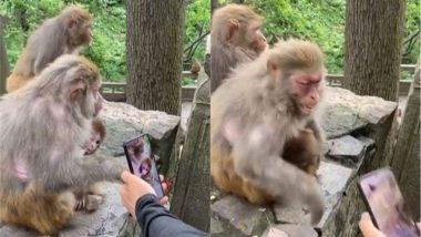 शख्स ने नन्हे बंदर की खींची तस्वीर तो भड़क उठी मां बंदरिया, Viral Video में देखें कैसे  उसने निकाला अपना गुस्सा