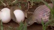 Snake Viral Video: अपने मुंह से कई गुना बड़े अंडे निगल गया सांप, वायरल वीडियो में देखें क्या हुआ इसका अंजाम