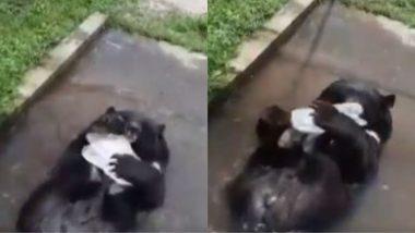 Viral Video: गर्मी को मात देने के लिए हिमालयी काले भालू ने किया कुछ ऐसा... पश्चिम बंगाल के सिलीगुड़ी से वायरल हुआ वीडियो