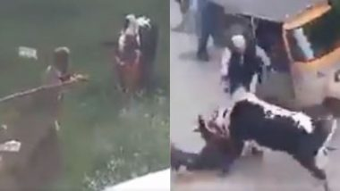 इसे कहते हैं आ बैल मुझे मार, शख्स ने डंडे से बैल को पिटा तो उसने ऐसा सबक सिखाया कि देखते रह गए लोग (Watch Viral Video)