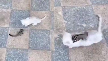 गिलहरी को कमजोर समझ बिल्ली मौसी ने दिखाया टशन, नन्हे जीव से मिला ऐसा सबक कि निकल गई सारी हेकड़ी (Watch Viral Video)