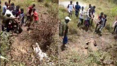 महाराष्ट्र: रिहायशी इलाके में दाखिल होकर मगरमच्छ ने मचाया आतंक, रेस्क्यू करने पहुंची टीम को दिखाने लगा टशन (Watch Viral Video)