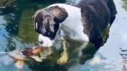 पानी में कलरफुल मछलियों के साथ खेलता दिखा नन्हा डॉग, मिली पपी को प्यार भरी किस (Watch Viral Video)