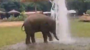 फव्वारे को देखकर अटखेलियां करने लगा हाथी, मस्ती में उछल-कूद कर लगा नहाने (Watch Viral Video)