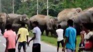 हाथियों के झुंड को परेशान कर भीड़ ने लिया पंगा तो गजराज ने ऐसे सिखाया सबक (Watch Viral Video)
