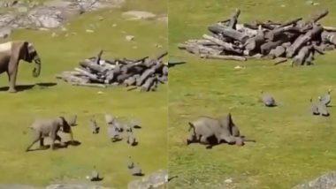 बत्तखों के साथ खेलते समय धड़ाम से गिरा नन्हा हाथी, क्यूटनेस से भरे इस Viral Video को देख मुस्कुरा देंगे आप