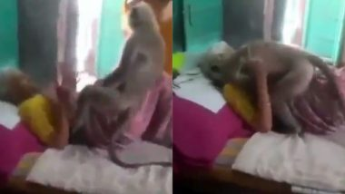बीमार दादी से मिलने के लिए जब उसके घर पहुंचा लंगूर, जो रोज उसे खिलाती थी खाना, देखें दिल को छू लेने वाला Viral Video