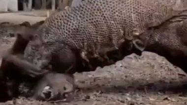 Viral Video: शिकारी ड्रैगन ने बंदर पर किया जबरदस्त अटैक, बड़ी बेरहमी से ली उसकी जान