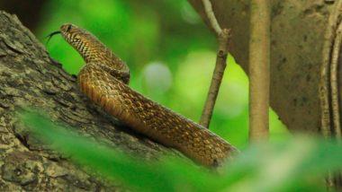 World Snake Day 2021: विश्व सर्प दिवस आज, सांपों की विभिन्न प्रजातियों में केवल 7 फीसदी ही हैं जहरीले