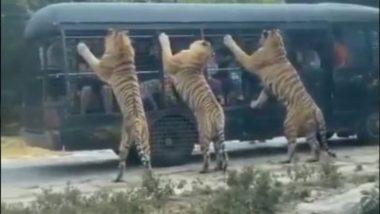 पर्यटकों से भरी गाड़ी को जब तीन बाघों ने घेर लिया, हलख में अटक गई सबकी जान… देखें हैरान करने वाला Viral Video