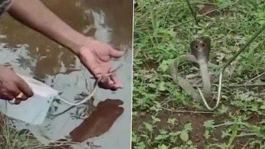 Odisha: कालाहांडी के एक घर में 26 बच्चों के साथ मिली मादा कोबरा, देखें वायरल तस्वीरें
