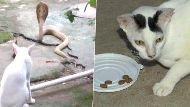 Brave Cat: मालिक को बचाने के लिए बिल्ली ने की किंग कोबरा से मारपीट, घंटो करती रही दरवाजे पर पहरेदारी, देखें तस्वीरें