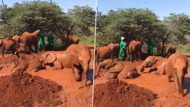 Viral Video: हाथियों के बच्चों का कीचड़ में लोटने और खेलने का क्यूट क्लिप वायरल, वीडियो देख हंसी छूट जाएगी