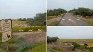 पीएम मोदी ने गुजरात के भावनगर में 3000 से अधिक काले हिरणों के झुंड को सड़क पार करते हुए क्लिप किया शेयर