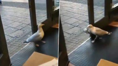 Viral Video: स्टोर में घुसकर सीगल ने चुराया चिप्स का पैकेट, वीडियो देख दिल हो जाएगा खुश