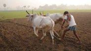 मध्य प्रदेश में किसानों पर आफत बनकर बरसी बारिश, फसलों को हुआ भारी नुकसान