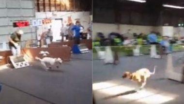 Dog Race Viral Video: अनोखी डॉग रेस ने आकर्षित किया लोगों का ध्यान, कुत्तों के इस रोमांचक खेल का वीडियो हुआ वायरल