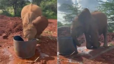 पानी से भरी बाल्टी को धक्का मारकर अटखेलियां करने लगा नन्हा हाथी, उसकी नटखट शैतानियां जीत लेंगी आपका दिल (Watch Viral Video)