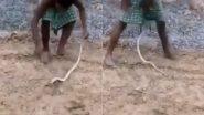 सांप को छेड़ने की शख्स को चुकानी पड़ी भारी कीमत, गुस्साए नागराज ने ऐसे सिखाया सबक (Watch Viral Video)