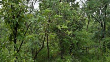 Viral Pics: क्या आपको नजर आ रहा है झाड़ियों में छुपा हुआ बाघ? ढूंढकर बताएं को जानें