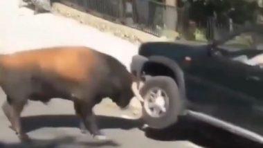 सांड के गुस्से की भेंट चढ़ी सड़क पर खड़ी कार, Viral Video में देखें कैसे जानवर ने गाड़ी पर उतारा अपना गुस्सा