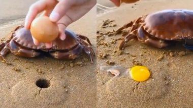 Viral Video: केकड़े के सिर पर अंडा फोड़ने वाले शख्स के वीडियो को देख फूटा लोगों का गुस्सा, आप भी देखकर रह जाएंगे दंग