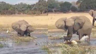 पानी में घुसकर गुस्साए हाथी ने मगरमच्छ को दी करारी शिकस्त, Viral Video देखकर आपको भी अपनी आंखों पर नहीं होगा यकीन