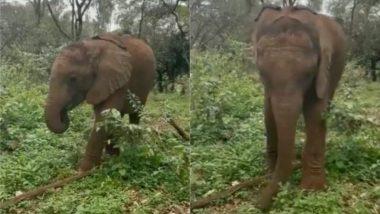 जंगल में भोजन की तलाश के दौरान हाथी ने दिखाया अपने सूंड का हुनर, Viral Video को देख गजराज के टैलेंट पर फिदा हुए लोग