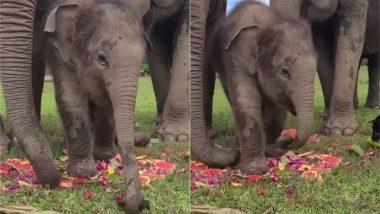 Viral Video: इंटरनेट पर छाया चाव से तरबूज खा रहे नन्हे हाथी का मज़ेदार वीडियो, गजराज की मनमोहक अदा पर फिदा हुए लोग