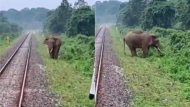 रेलवे ट्रैक पर चल रहा था हाथी अचानक सामने आ गई ट्रेन, लोको पायलट ने ऐसे बचाई गजराज की जान (Watch Viral Video)