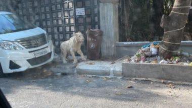 कंबोडिया की सड़कों पर खुलेआम घूमता दिखा शेर, हैरान करने वाली तस्वीरें और वीडियो वायरल (Watch Viral Pics & Video)