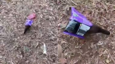 जब स्नैक्स के पैकेट में फंस गई नन्ही मैना, काफी देर तक निकलने के करती रही कोशिश लेकिन… (Watch Viral Video)