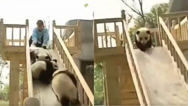 Viral Video: स्लाइड पर खेलते हुए 4 पांडा ने अपनी क्यूटनेस जीता लोगों का दिल, सोशल मीडिया पर वायरल हुआ मनमोहक वीडियो