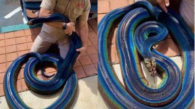 Rainbow Python: क्या आपने कभी देखा है इंद्रधनुषी अजगर? बार-बार देखा जा रहा है इस अद्भुत सांप का वायरल वीडियो