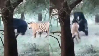 Viral Video: शिकार करने के इरादे से टाइगर ने किया भालू पर अटैक, लेकिन हुआ कुछ ऐसा… वायरल वीडियो देख दंग रह जाएंगे आप