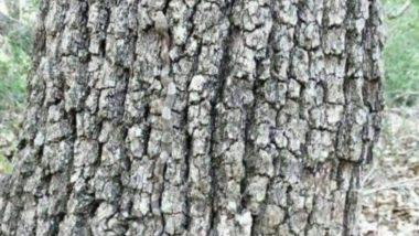 Viral Pic: इस फोटो में नजर आ रहे पेड़ में छुपा है एक खतरनाक सांप, ढूंढकर बताओ तो जानें