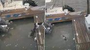 Viral Video: मगरमच्छ ने पेट डॉग को अपने जबड़े में दबोचा, कुत्ते ने ऐसे बचाई अपनी जान, देखें वायरल वीडियो