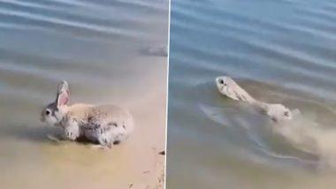 Rabbit Swimming Video: खरगोश के समुद्र में तैरने और पानी का आनंद लेने का दुर्लभ क्लिप हुआ वायरल, वीडियो देख लोग हुए हैरान