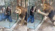 Viral Video: लेबनान के चिड़ियाघर में लड़कियों ने शेर से किया छेड़छाड़, जानवर ने दिया जबरदस्त रिएक्शन, देखें वीडियो
