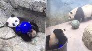 Viral Video: बॉल से खेलते हुए टब में गिरा बेबी पांडा, मामा पांडा ने आकर बचाया, देखें क्यूट वीडियो
