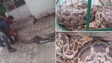 Python Swallowed Alive Monkey: वड़ोदरा में अजगर निगल गया जिंदा बंदर, वन अधिकारीयों ने सुरक्षित ऐसे निकाला बाहर