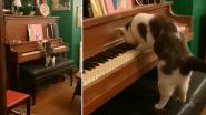 Cat Playing the Piano Video: एक प्रोफेशनल की तरह पियानो बजाते हुए बिल्ली का क्लिप वायरल, वीडियो ने जीता लोगों का दिल