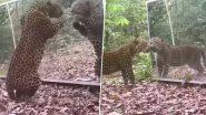 Leopard Video: शीशे में अपने आप को देखकर तेंदुए ने मारा झपट्टा, उसके बाद जो हुआ...देखें वीडियो
