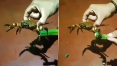 Crab Cutting Vegetables: यह शख्स केकड़े से कटवाता है अपने घर में सब्जी, वीडियो देख रह जाएंगे दंग