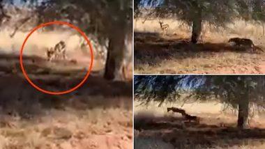 Viral Video: हिरण पर घात लगाए बैठा था तेंदुआ, ऐसे किया हमला..उसके बाद जो हुआ देखें वीडियो