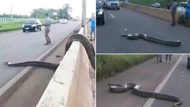Snake Video: विशालकाय एनाकोंडा को व्यस्त सड़क पार करते हुए देख ट्रैफिक रुका, वीडियो हुआ वायरल